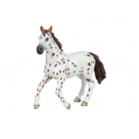 image_Jument_appaloosa_brune_51509